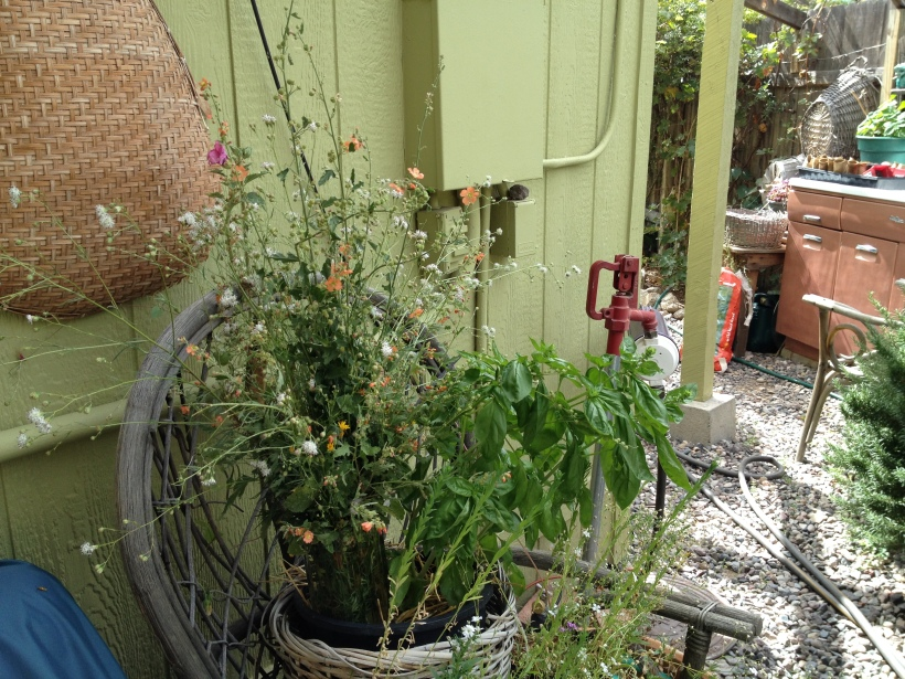 Even the utility area can be beautified with flowers!