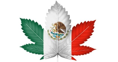 Mexico-Cannabis-1.jpg